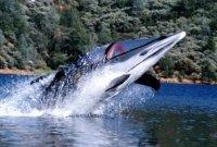 Подводный катер-дельфин